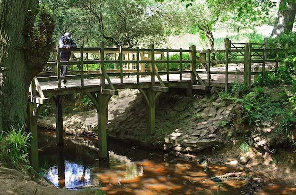 Pooh Sticks Bridge in Ashdown Forest