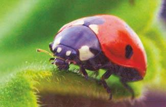 Ladybird on Ashdown Forest
